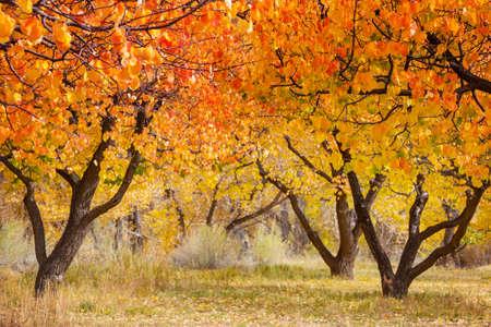Orange garden in autumn season