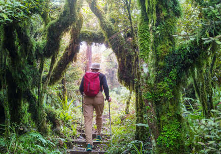 Man hiking bay the trail in the forest.Nature leisure hike travel outdoor Standard-Bild