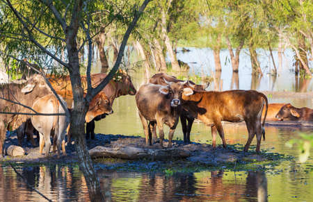 Herd of cows at summer green field .Agriculture farming rural pasture Imagens