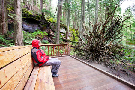 Tourist on bench in Hoh rain forest in national park, Washington, USA