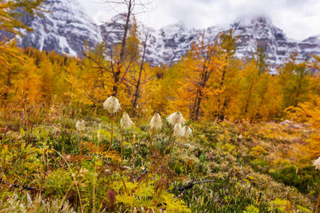 Beautiful autumn season in Canadian mountains. Fall background. Stok Fotoğraf