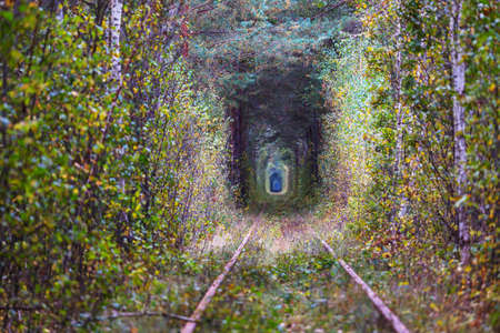 Trees tunnel in early autumn season Banque d'images