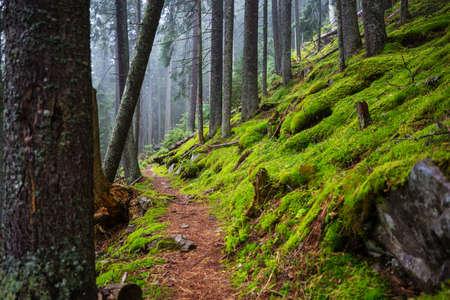 Rain forest with dense vegetation
