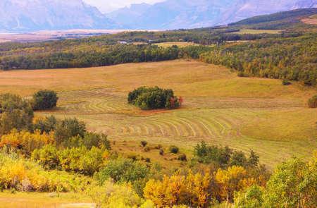 Yellow and orange fields in fall season