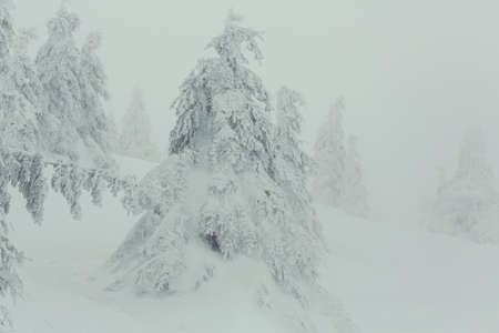 Snoowcovered trees in winter mountains. Christmas background Reklamní fotografie