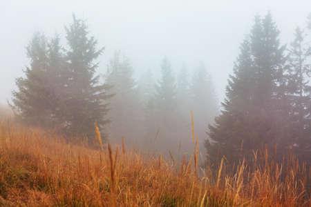 Late autumn landscapes. Misty forest it the morning Reklamní fotografie