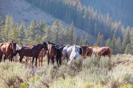 a herd of horses in a autumn meadow Reklamní fotografie