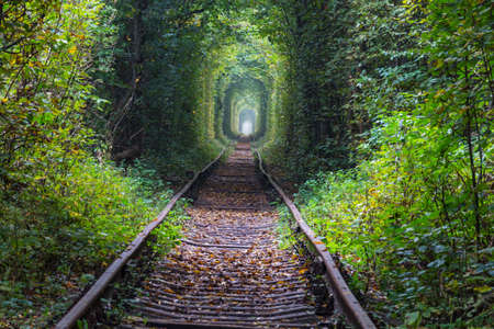 Trees tunnel in early autumn season Reklamní fotografie