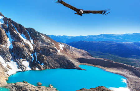 Andean Condor  flying over mountains,  Patagonia, Argentina. Фото со стока