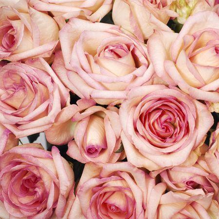 Italian roses Stock Photo - 307748