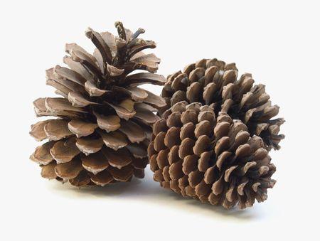 Pine Kegel