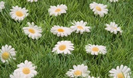 daisys: grass with daisys Stock Photo