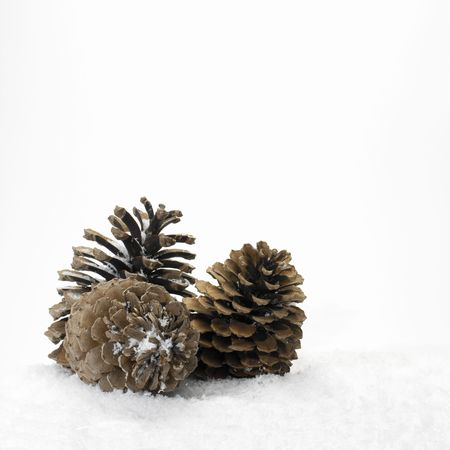Pine cones in the snow (white copy space)