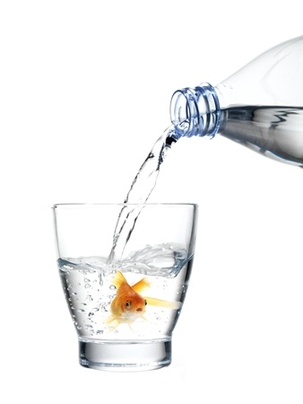 healthy goldfish in a water glass, pouring water out of a waterbottle (concept of fresh and healthy mineral water)