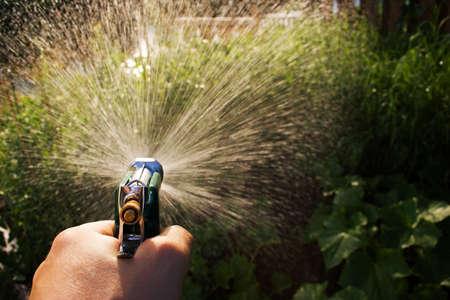 Regar el jardín con una manguera de pistola Foto de archivo - 339665