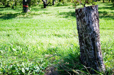 A tree stump in the middle of the grass Фото со стока - 346494