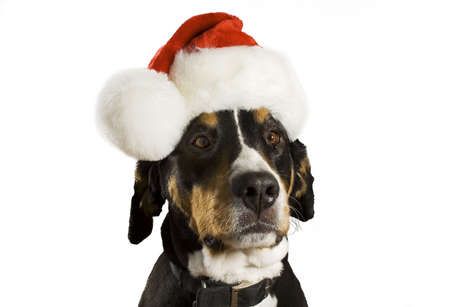 Dog with a Christmas hat (cute) photo