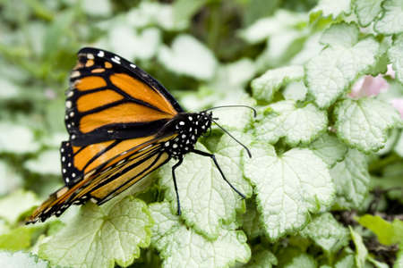 meta: A butterfly on a leaf