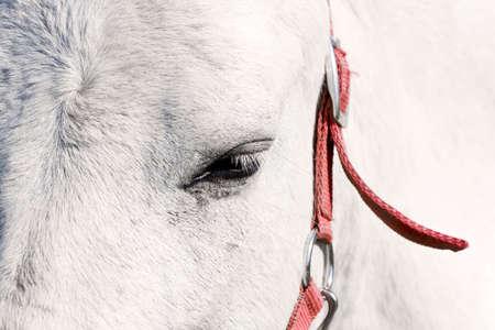 Beautiful white horse eye