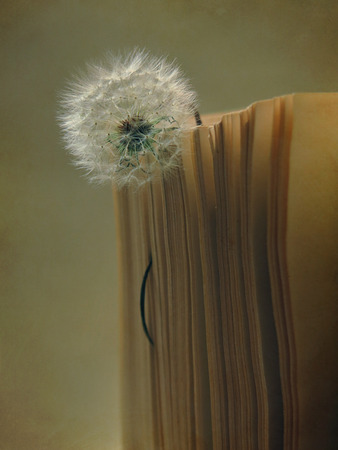 prose: book with dandelion