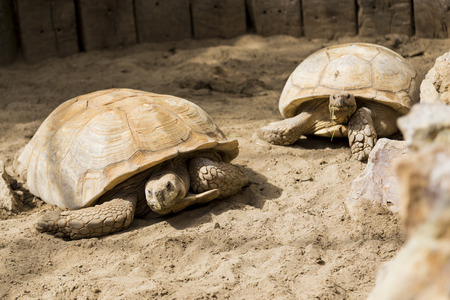 ancient turtles: Giant Turtle Family at a zoo park in Belgium Stock Photo