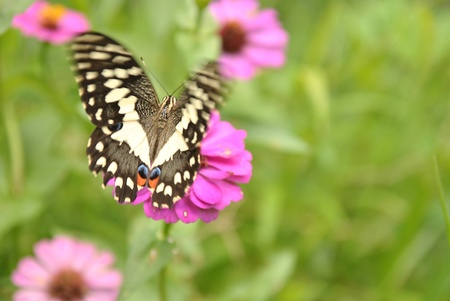 replenish: Movement of butterfly in natural environment with spread wing  Stock Photo
