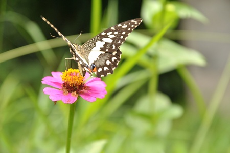 replenish: Movement of butterfly in natural environment with spread wing