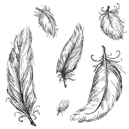 feathers: feathers