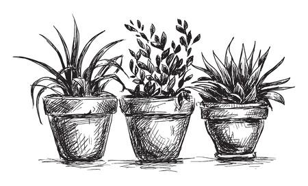 flower sketch: Flower pots