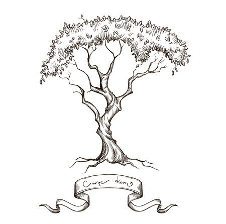 arbol raices: árbol viejo con bandera de la cinta dibujados a mano aislado en blanco