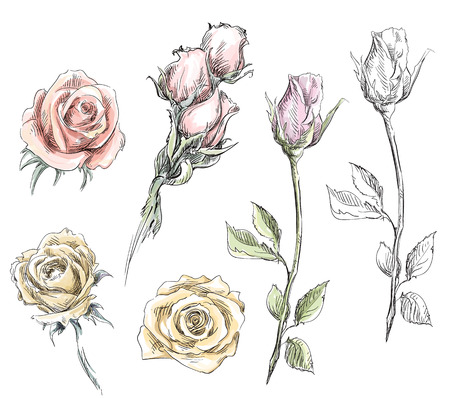 set of hand drawn roses  Vector flowers illustration