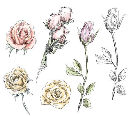 set van de hand getekende rozen Vector bloemen illustratie