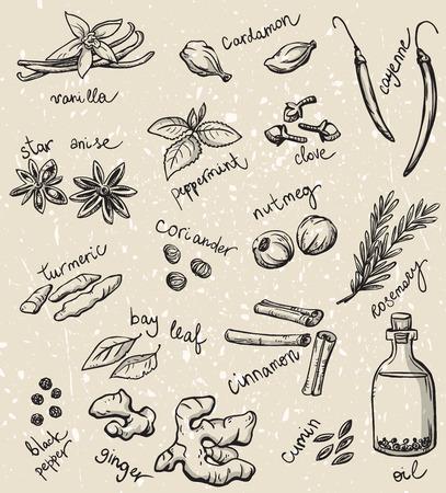 dessin: ensemble d'�pices et d'herbes illustration vectorielle