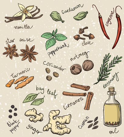 cayenne: set of spices and herbs vector illustration