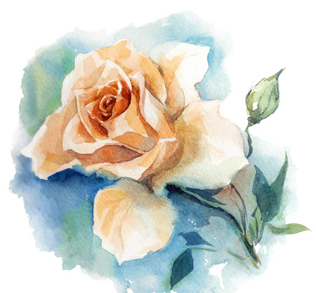 painted image: rose watercolor sketch. Vector illustration.
