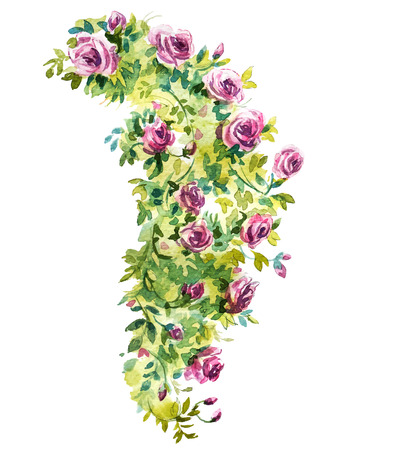 rose bush: Rose bush watercolor sketch. Vector illustration. Illustration