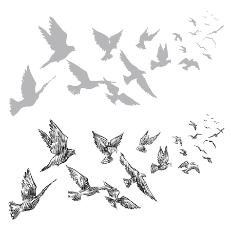 flying pigeons, hand drawn, vector illustration