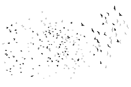 flying birds vector sketch.