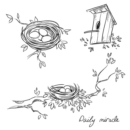 Hand drawn nests and a birdhouse, line drawing