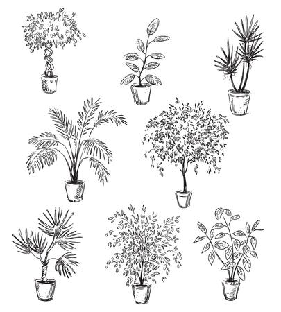 lijntekening: Set van huis bloemen in potten, vector tekening, volledig aanpasbaar