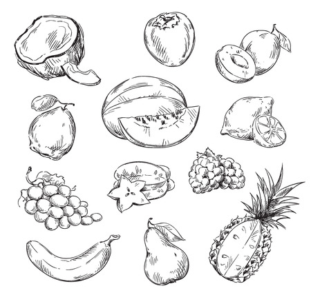 Vector line drawing of various fruits Imagens - 105516519