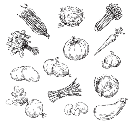 Vector line drawing of various vegetables Stock Illustratie