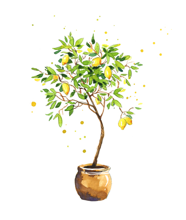 Lemon tree, watercolor sketch Banco de Imagens