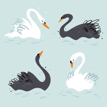 Elegant black and white swans vector illustration