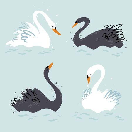 Ilustración de vector de cisnes blancos y negros elegantes