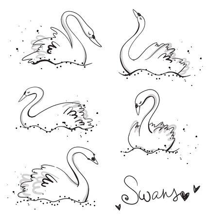 Set of hand drawn swans, line art, vector illustration Illusztráció