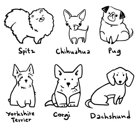 sketch of six breeds of cute small dogs, vector lineart