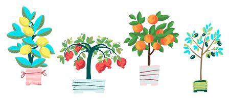 Set of potted plants: pomegranate, olive tree, tangerine and lemon. Cartoon vector illustration  イラスト・ベクター素材