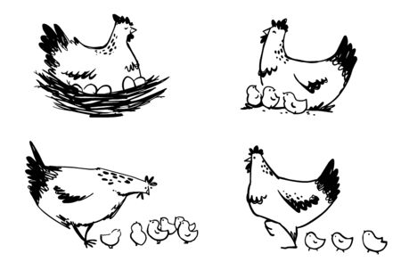 Set of hens with chicks and hen sitting on eggs, vector line art.