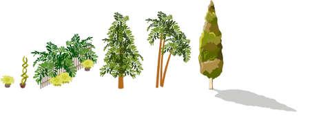 zypresse: Viele Arten von B�umen: Palm, Pflanzen, Blumen, auf wei�em Hintergrund